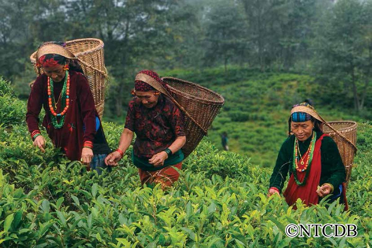 Tea and Culture