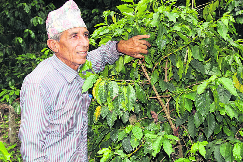 Coffee production below par, despite high market potential