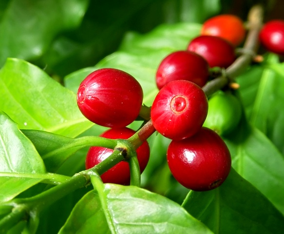 Minimum Price of Raw Coffee applicable for FY 2020/2021